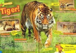 Maus03_15 - Tiger