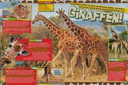 LZ02-16 - Giraffen