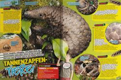 LZ07-17 - Tannenzapfentiere