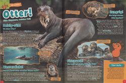 Maus03-16 - Otter