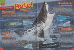 Maus06-15 - Haie