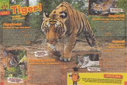 Maus 04/17, Tiger