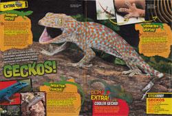 LZ_05-17-Geckos
