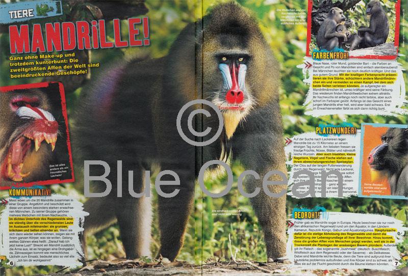 LZ0817-Mandrille - gross