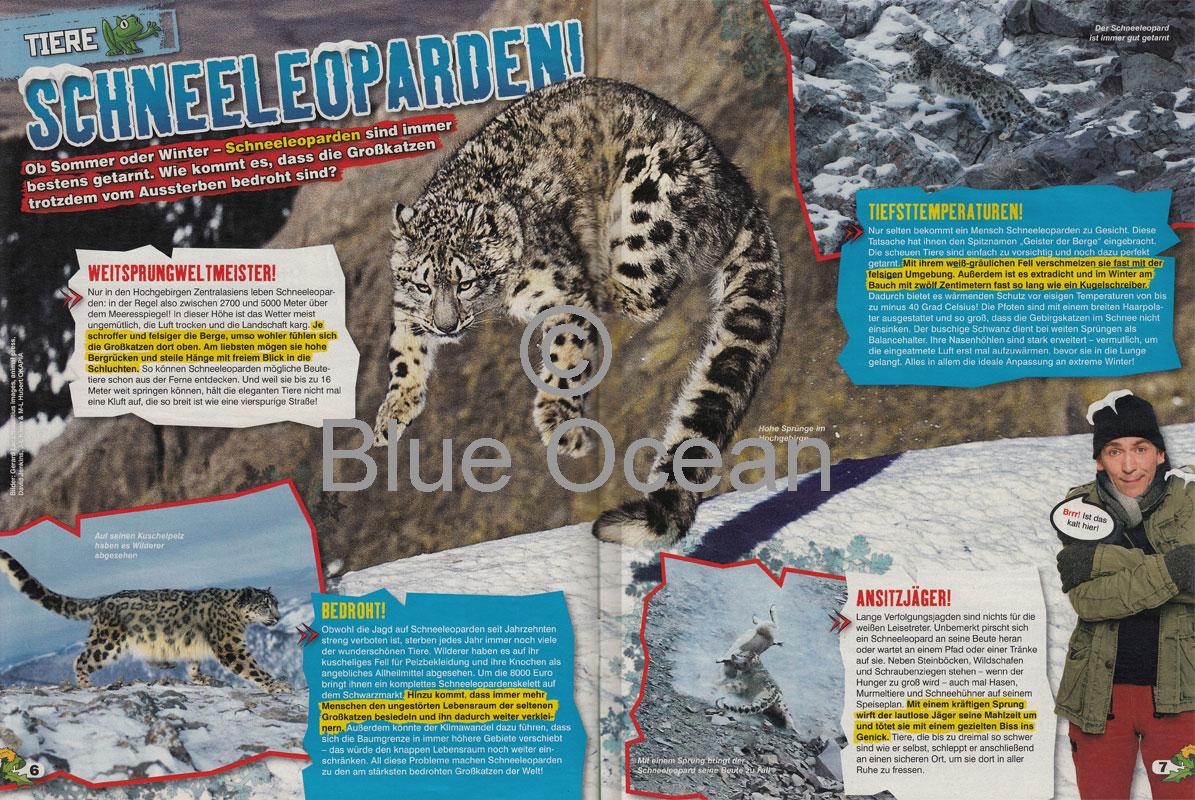 LZ0218-Schneeleopard - gross