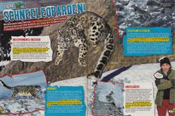 LZ0218-Schneeleopard