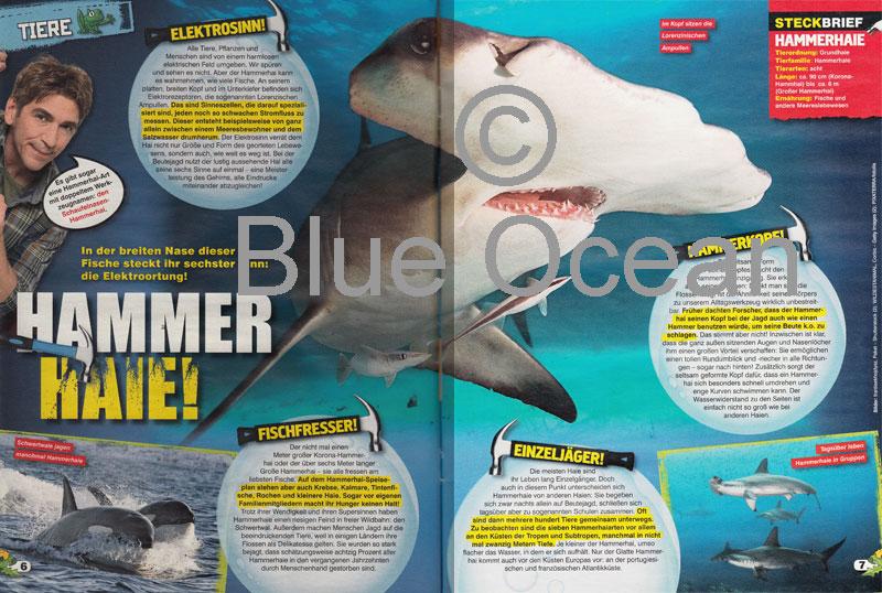 LZ03-18-Hammerhaie - gross