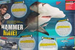 LZ03-18-Hammerhaie
