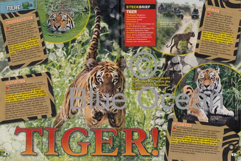 LZ04-18-Tiger - gross