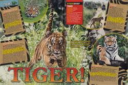 LZ04-18-Tiger