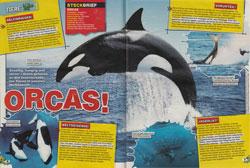 LZ05-18-Orcas