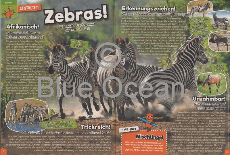 Maus05-18-Zebras - gross