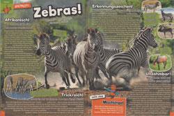 Maus05-18 - Zebras