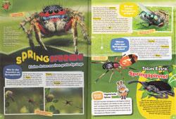 Maus07-18-Springspinnen