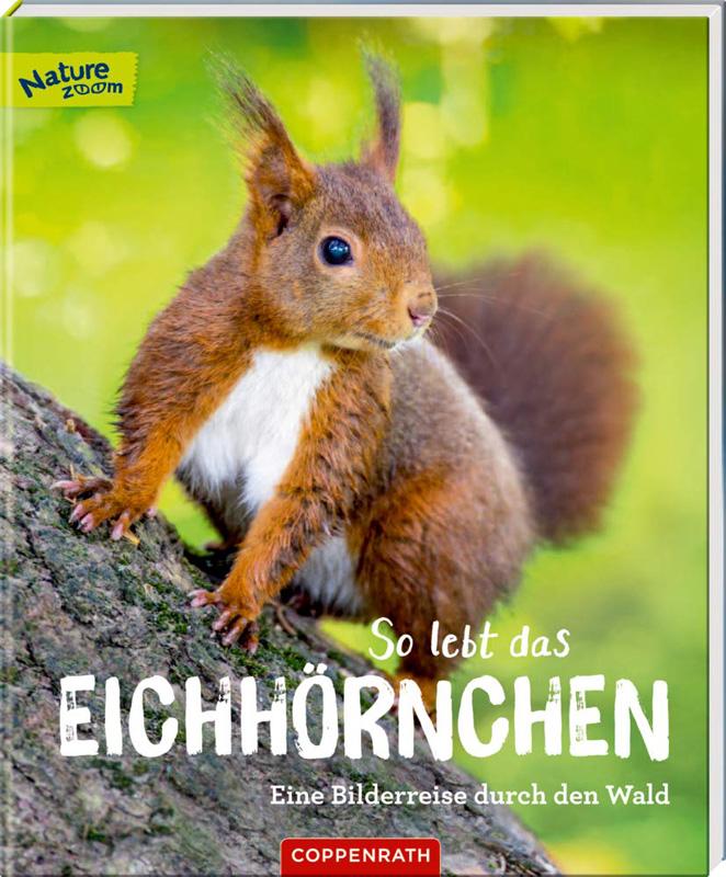 Eichhoernchen - gross