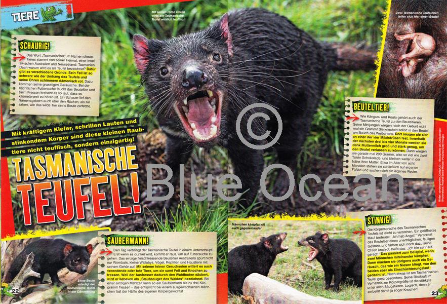 LZ03-19-Tasmanischer-Teufel - gross
