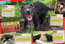 LZ03-19-Tasmanischer-Teufel