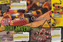 LZ04-19-Giftschlangen