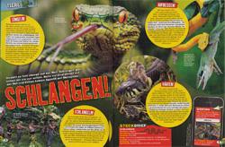 LZ04-19-Schlangen