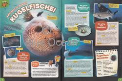 Maus05-19 - Kugelfische